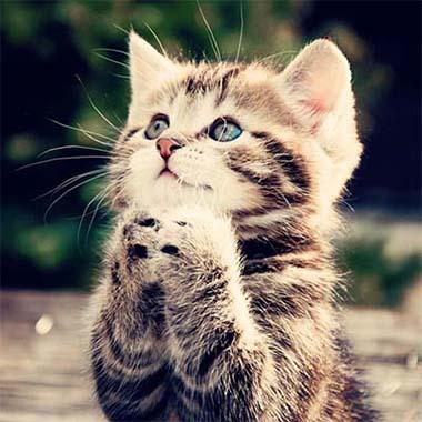 img_ur Cute Cat